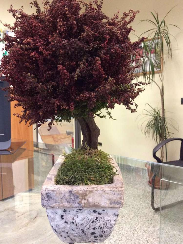 Piante stabilizzate bonsai rosso
