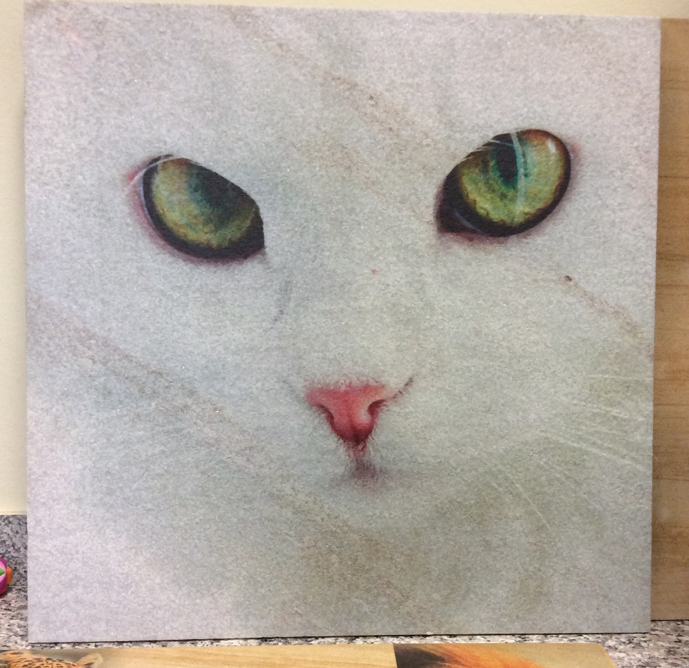 quadro gatto bianco